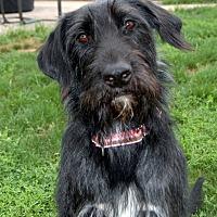 Adopt A Pet :: Muriel - Hanover, PA
