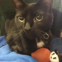 Adopt A Pet :: Bane - Manitowoc, WI