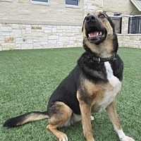 Adopt A Pet :: Ada - North Richland Hills, TX
