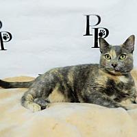 Adopt A Pet :: Patches - Walton County, GA