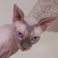 Adopt A Pet :: Mary Theresa - Davis, CA