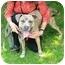 Photo 2 - American Pit Bull Terrier Mix Dog for adoption in Berkeley, California - Hendrix