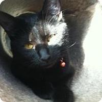 Adopt A Pet :: Ali - Omaha, NE