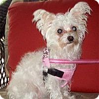 Adopt A Pet :: Dakota - Tallahassee, FL