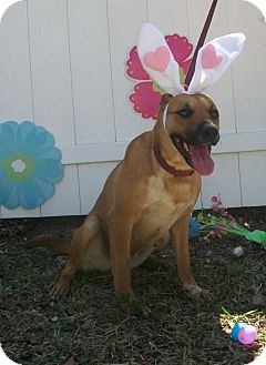 Shepherd (Unknown Type)/Labrador Retriever Mix Dog for adoption in Palmetto Bay, Florida - Duchess