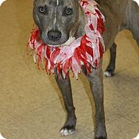 Adopt A Pet :: Angel - Snellville, GA