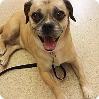 Adopt A Pet :: Nina - Fayette City, PA