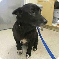 Adopt A Pet :: Betsy - Lomita, CA