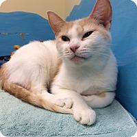 Adopt A Pet :: Trish - Byron Center, MI