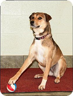 Shepherd (Unknown Type) Mix Dog for adoption in Ada, Oklahoma - HONEY