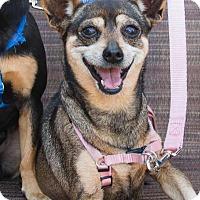 Adopt A Pet :: TIny Girl - Irvine, CA