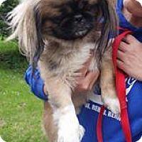 Adopt A Pet :: Skippy - Rexford, NY