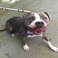 Adopt A Pet :: ELI - Alameda, CA
