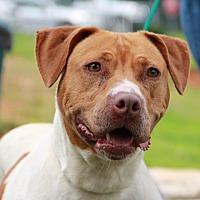 Adopt A Pet :: Lisa - Greensboro, NC