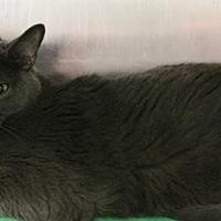 Adopt A Pet :: Ascot - Hilton Head, SC