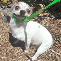 Adopt A Pet :: Memphis - Yreka, CA