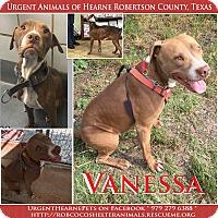 Adopt A Pet :: Vanessa - Hearne, TX