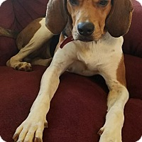 Adopt A Pet :: Spencer - cicero, NY
