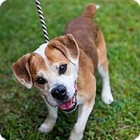 Adopt A Pet :: Thompson - Cambridge, ON