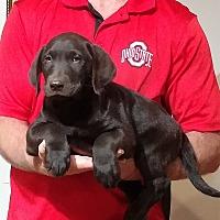 Adopt A Pet :: Hunter - New Philadelphia, OH