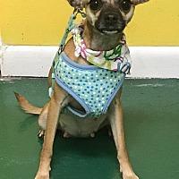 Adopt A Pet :: SANDY - Fort Pierce, FL