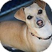 Adopt A Pet :: Metro - Santa Barbara, CA