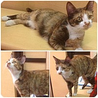 Adopt A Pet :: Queeny - Modesto, CA