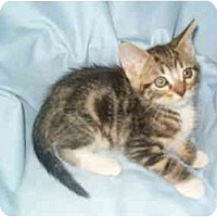 Adopt A Pet :: Marble - Keizer, OR