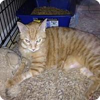 Adopt A Pet :: Muffin - Fort Lauderdale, FL