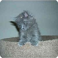 Adopt A Pet :: Mulligan - Davis, CA