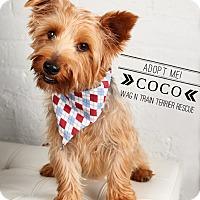 Adopt A Pet :: Coco-Pending Adoption - Omaha, NE