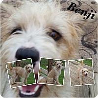 Adopt A Pet :: Benji - San Antonio, TX