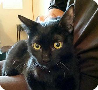 Domestic Shorthair Cat for adoption in Lemoore, California - Buffy