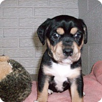 Adopt A Pet :: Baby Elsa - Augusta County, VA