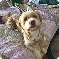 Adopt A Pet :: Tobias - Oviedo, FL