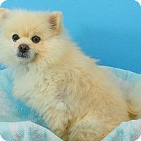 Adopt A Pet :: Dude - conroe, TX