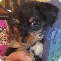 Adopt A Pet :: Thumb - Los Angeles, CA