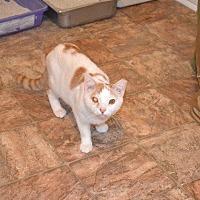 Adopt A Pet :: Aubie Camper - Cambridge, MD