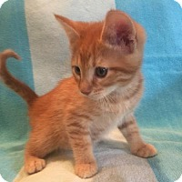 Adopt A Pet :: Fred - Herndon, VA