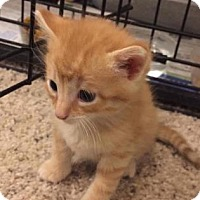 Adopt A Pet :: Wulfenite - Mission, KS