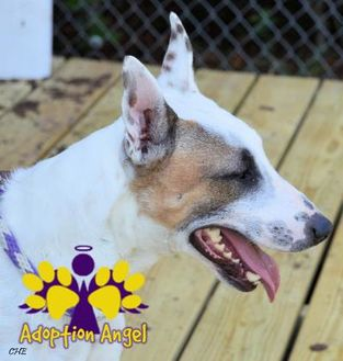 Mixed Breed (Medium) Mix Dog for adoption in Georgetown, Texas - Bull