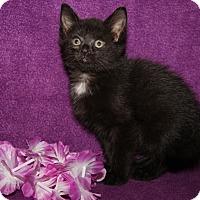 Adopt A Pet :: Sansa - Marietta, OH