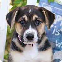 Adopt A Pet :: Luma von Madison - Thousand Oaks, CA
