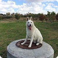 German Shepherd Dog Mix Dog for adoption in Concord, California - Papa