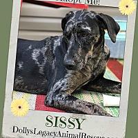 Adopt A Pet :: SISSY - Lincoln, NE