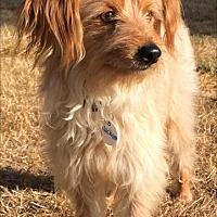 Adopt A Pet :: Jackson - Issaquah, WA