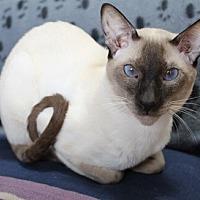 Adopt A Pet :: Si - Mississauga, Ontario, ON