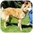 Photo 4 - Border Collie Dog for adoption in Bellevue, Nebraska - Seamus