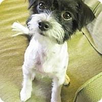 Adopt A Pet :: Tuffy - Scottsdale, AZ