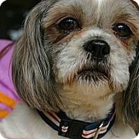 Adopt A Pet :: Smokin Joe - Cantonment, FL